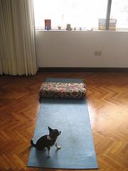 yoga_altar lucy yogafreedom