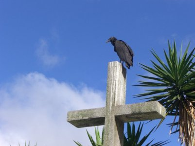 bird on cross