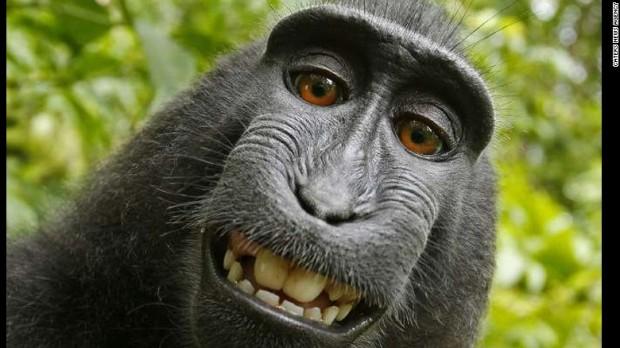 140808122043-01-selfie-monkey-0808-exlarge-169