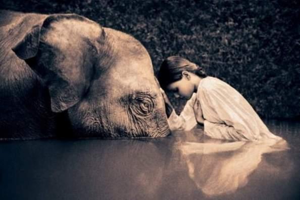 holy-elephant