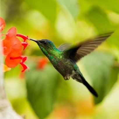 Photo by Djalma Paiva Armelin on Pexels.com