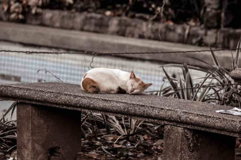 photo of a cat sleeping on gray concrete bench